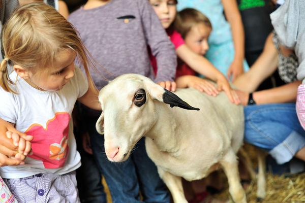 Rencontre à la ferme - Ferme de la Brebis Bavarde à Albiac_09 © Lot Tourisme - C. ORY
