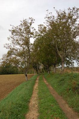 Thégra_Chemin - Falguières