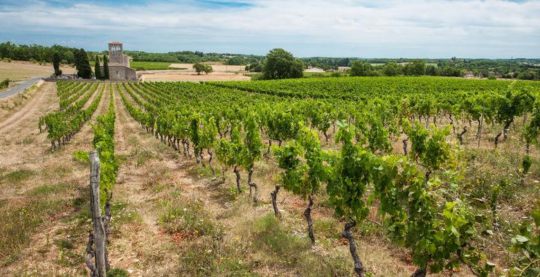 Vignes du Château Latuc à Mauroux © Lot Tourisme - C. ORY
