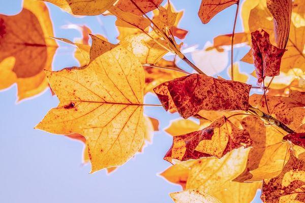 autumn-3763897_1280©pixabay