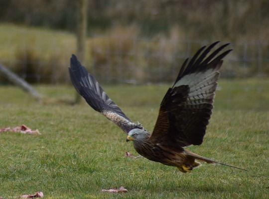 balade-nature-oiseaux-Pixabay