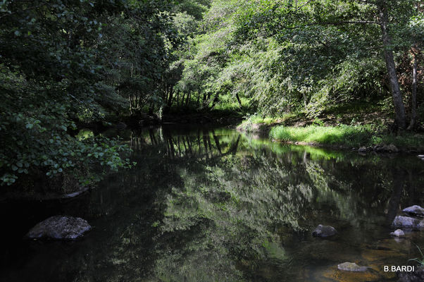 balade nature forêt gorge maronne