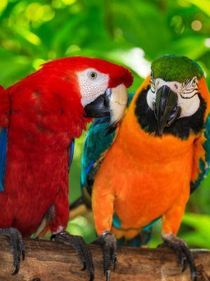 diariofemenino Sonar con pajaros de colores