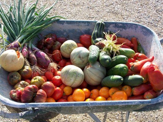 fruits-legumes-ferme-ques-aquo
