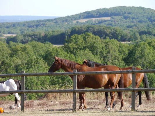 grand lac chevaux