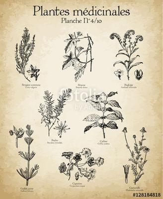 plantes.medicinales