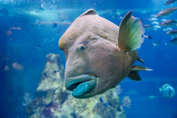 Napoléon Aquarium de Biarritz