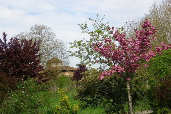 Abbaye de Maylis - Fleurs