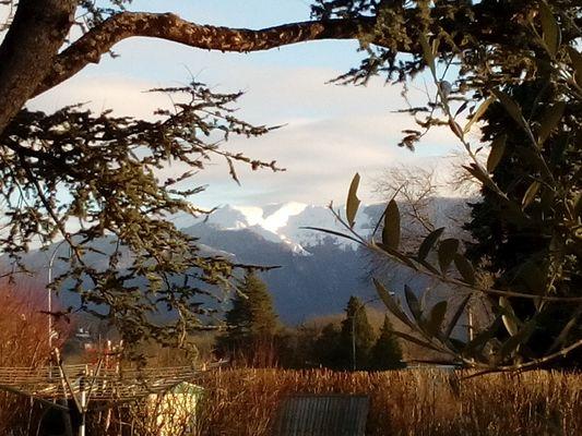 Ancolie-des-Pyrenees-Vue-sur-les-Pyrenees (Laurioux Marie-Noelle)