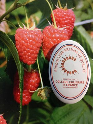 College-culinaire-France-Framboises