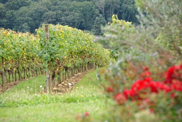 Domaine Mont Oraàs 1440x900
