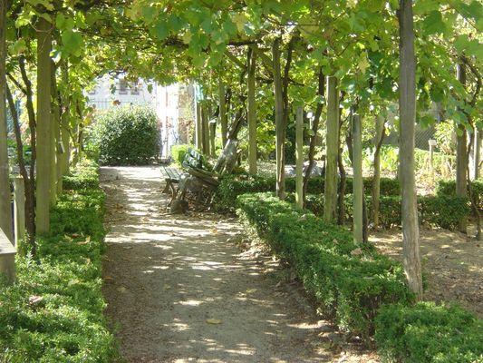 Jardin de Payot - vignes ACM