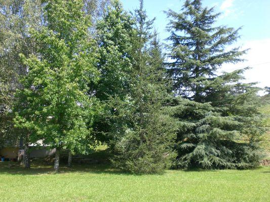 Le Labrit - Jardin