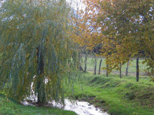 Le Labrit - Ruisseau