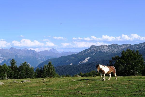 Soulaing Ossau et cheval TSJPG