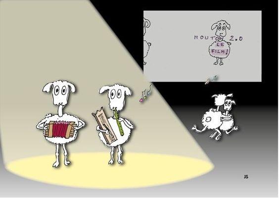 mouton-13