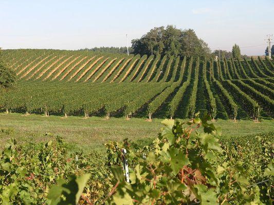 Vignoble du Tursan