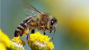 abeille-9