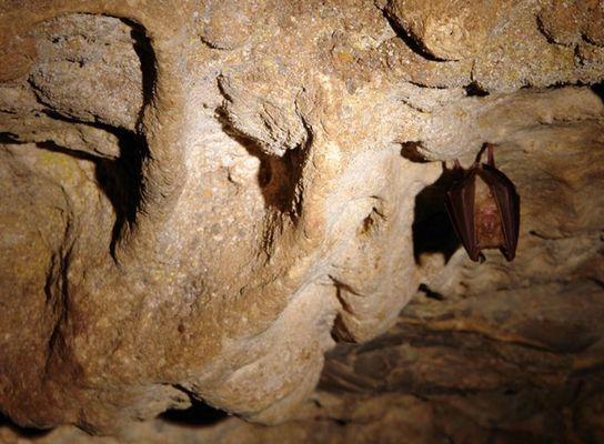 grottes-de-Sare-Chauves_souris