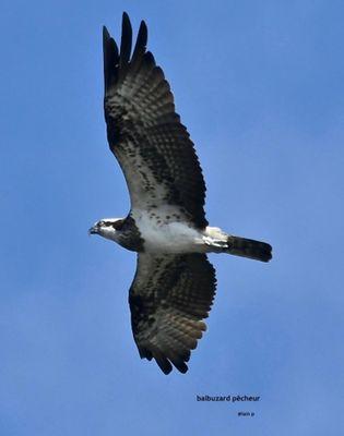 promenade-ornithologique--1-