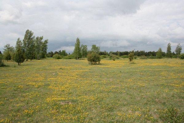 Pelouse sèche de Marigny