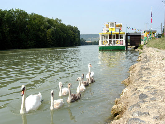 bateau-champagne-vallee-cumieres-cygnes