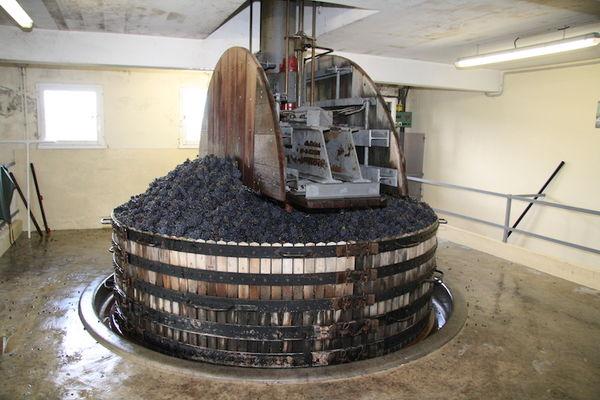 Champagne Apollonis - Michel Loriot - Festigny