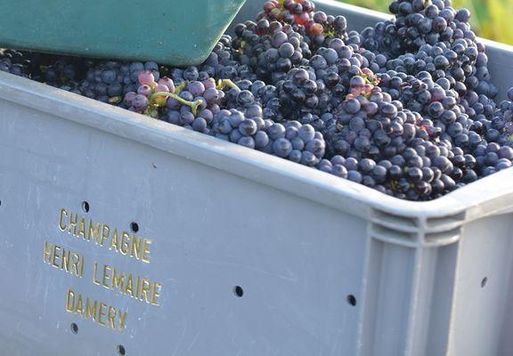 Champagne Henri Lemaire - Damery