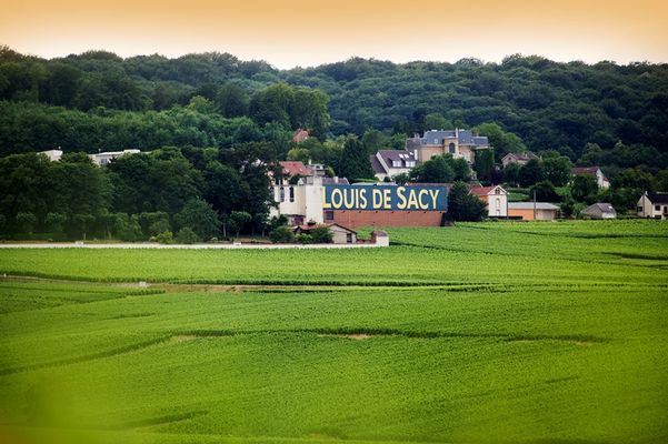 Champagne Louis De Sacy - Verzy