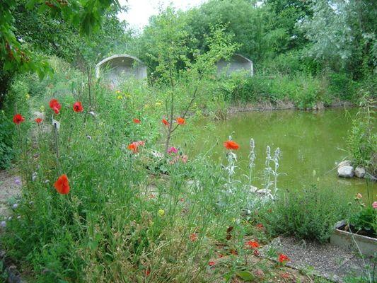 Bassin Jardin Salix-malva