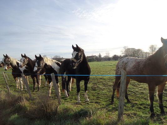 Gite Petit paysan - Nos chevaux