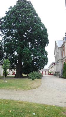 Cour d'honneur 2- Lac du Der