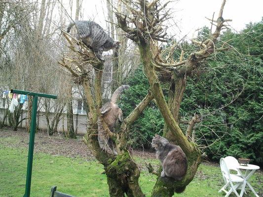 La-Ferme-Sympa-l'arbre à chats