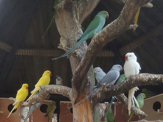La Ferme aux Oiseaux Exotiques - Athis©Mme Brisson6_Fotor