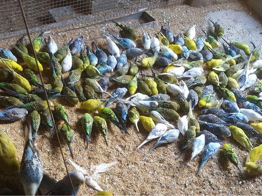 La Ferme aux Oiseaux Exotiques - Athis©Mme Brisson7_Fotor