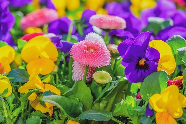 marche-aux-fleurs-2