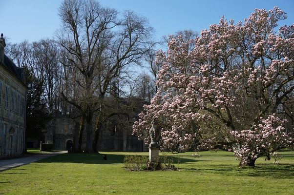 Magnolia de Trois Fontaines