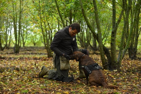 cav-o-truffes-matougues-chien