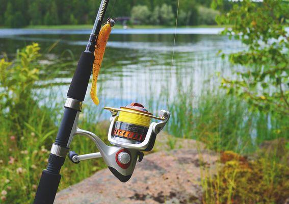 Pêche-au-coup-pixabay-lac-du-der