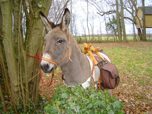 séjour en cabane avec un âne