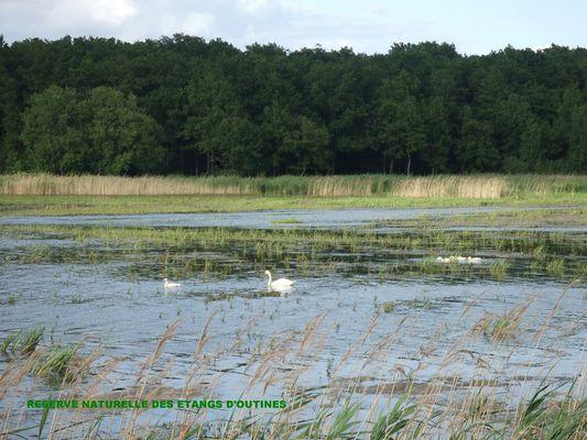 Le Tilleul - les étangs d'Outines