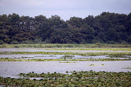 Les étangs  d'Outines