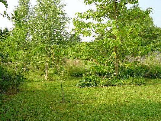 jardin Salix Malva