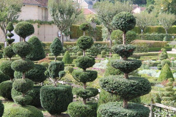 Le topiarium d'ifs - Château du Grand Jardin - Jonville