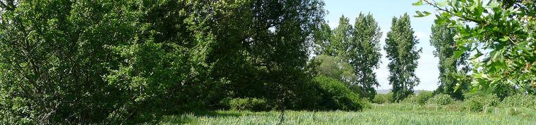 randonnee-le-pic-vert-la-chapelle-des-marais-1584171