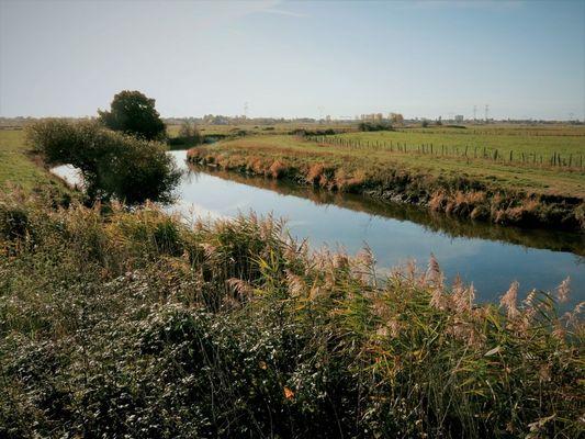 19-les-chaussees-st-malo-de-guersac-pont-du-pin-5-1373671