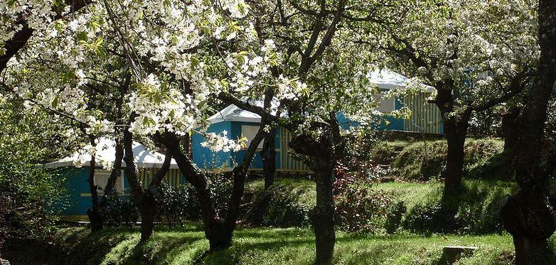 Camping Les Cerisiers Vernet Bengalis