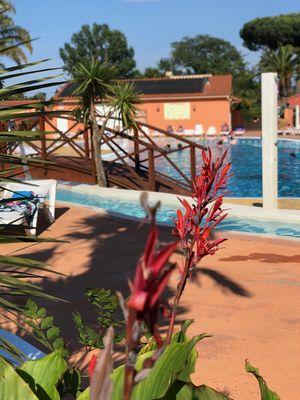 Fleurs-piscine-camping-les-galets-argeles-2019