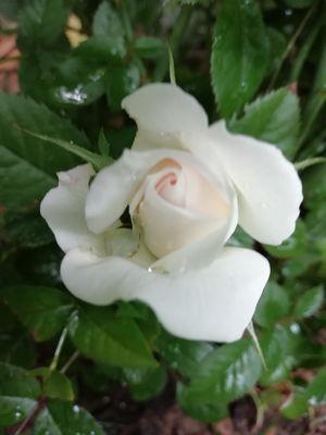 Fleurs la Mirabelle Casteil