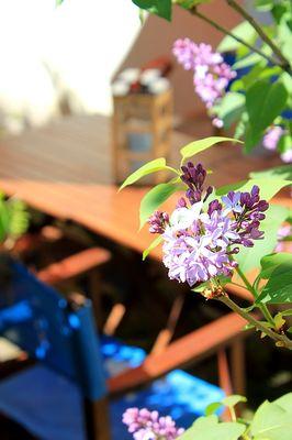 jardin gite terrasse prades 66 perpignan les loges (9) (1)